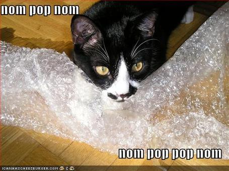 Funny-pictures-cat-bites-bubble-wrap_medium