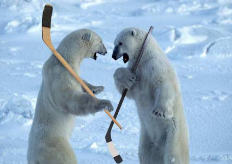 Polar-bears-hockey_medium
