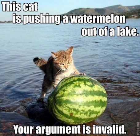 Catwatermelonlake_medium_medium