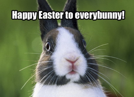 Happyeasterbunny_medium