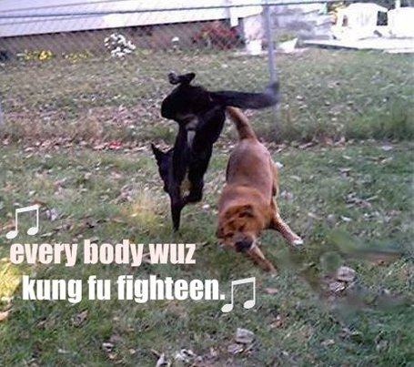 Karate_dogs-13073_medium