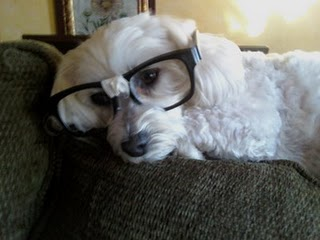 Nerd_dog_lol_medium