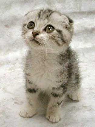 Cute-kitten_medium