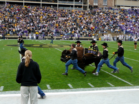 Colorado_ralphie_iv_ksu_2006_medium