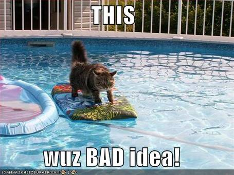 Funny-pictures-cat-surfing-pool_medium