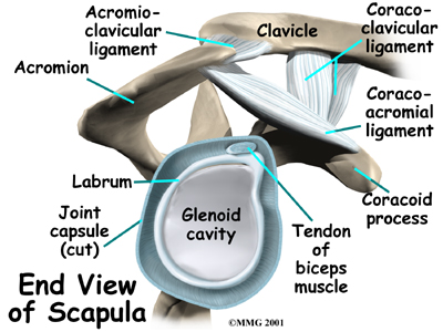Shoulder_labral_tear_anat02_medium