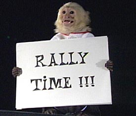 Rally_monkey_medium