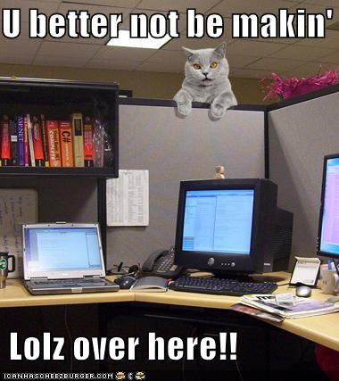 Funny-pictures-boss-cat-office-cubicle_medium