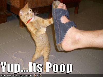 cat declawing litter problems