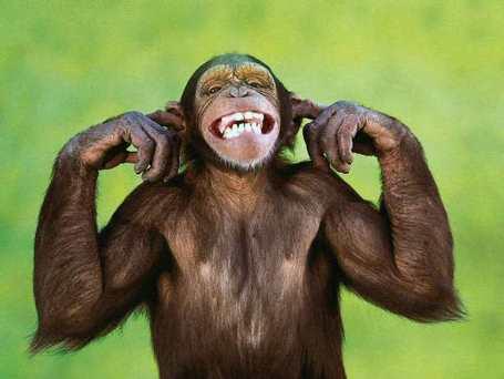 Monkey13_medium