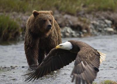Eagles_20bears-thumb-400x286-34928_medium