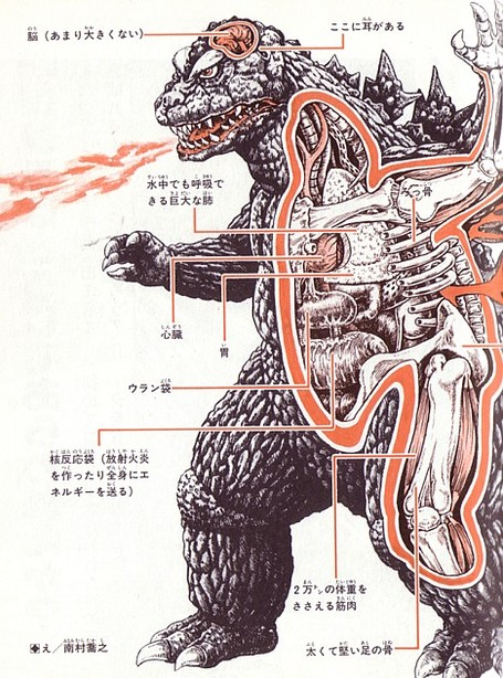 Anatomy_godzilla_medium