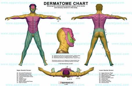 Dermatome-chart_medium