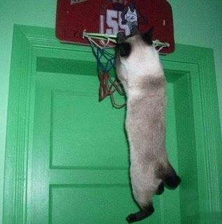 Really-funny-cat-doing-basletball-slam-dunk-pic_medium