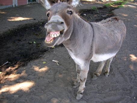 Donkey_medium
