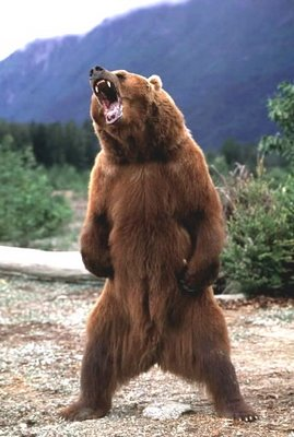 Bear_roar_medium