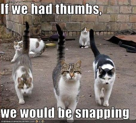 Funny-pictures-cats-would-snap-if-they-had-thumbs_medium
