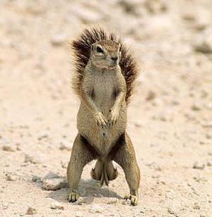 Squirrel_nuts_1_medium