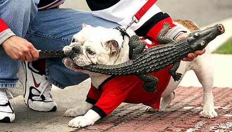 Uga_versus_gator_medium