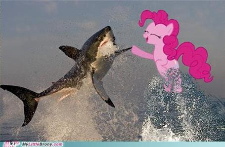 My-little-pony-friendship-is-magic-brony-shark-week-is-magic_medium