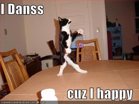 Funny-pictures-dancing-cat_medium