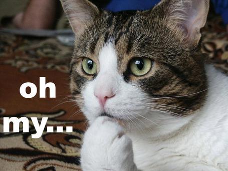 Worried_cat_medium