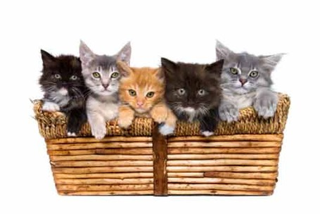 Cute-kittens-3_medium