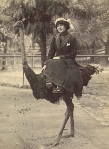 Emu1_medium