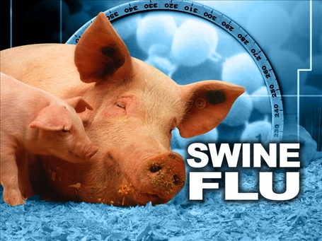 Swine-flu1_medium