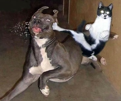 Karate-cat_medium