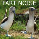 Fart-noise-birds