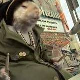 Stoned_hamster