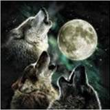 Three_wolf_moon_tshirt_image