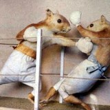 Squirrel_boxing