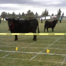 2011-04-16_cow_pie_bingo