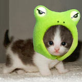 Cutest_little_kitten_and_frog