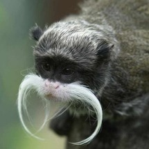 Monkeystache