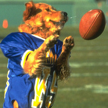 Football-dog_large_large