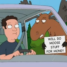 Moose_stuff