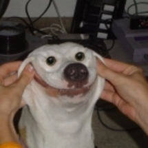 Smiling-dog-tn