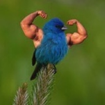 Birds_with_arms8
