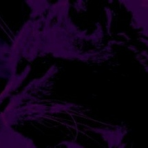 0-purplecat_press_logo__wildcat_-small