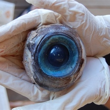 121011-science-eyeball-3p_photoblog600