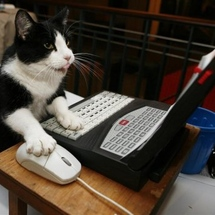 47351__468x_clever-cat-using-pc
